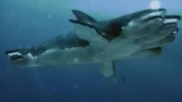 5-Headed Shark Attack(2017)